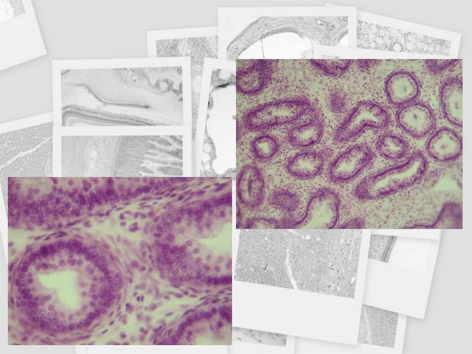 helmint és ektoparazita protozoonok