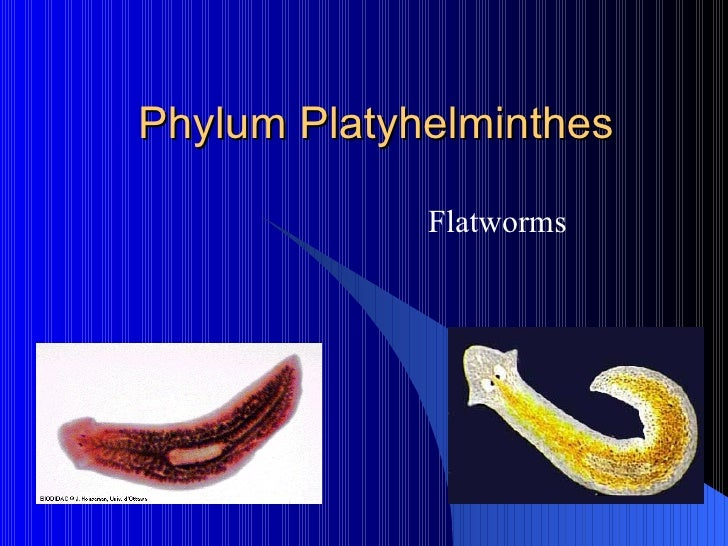 platyhelminthes phylum ppt röviden enterobiosis