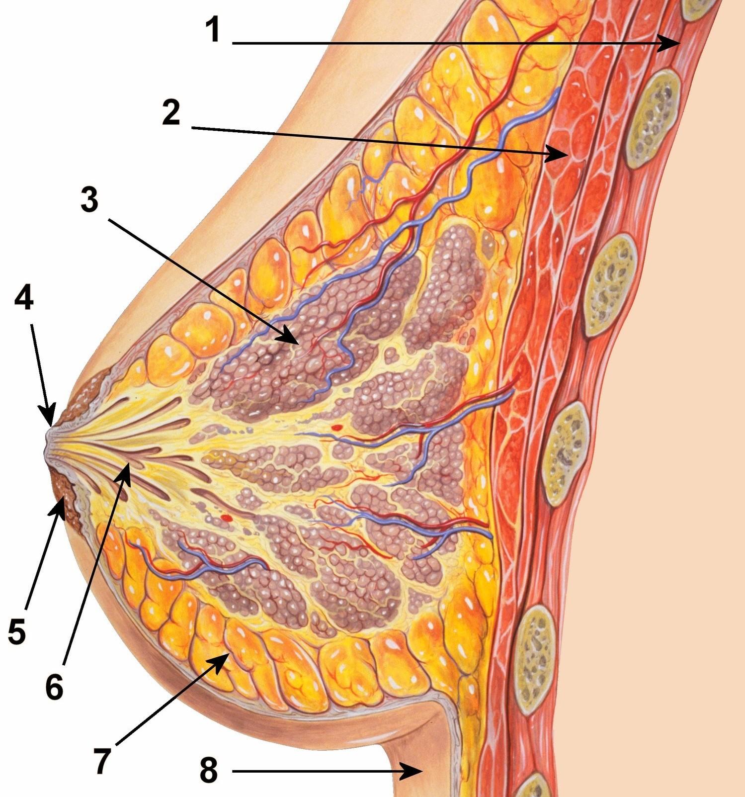 Emlőrák tünetei és kezelése