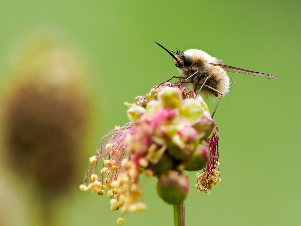 Az egészséges utódokért - mire tanít a magzat méhen belüli viselkedése?