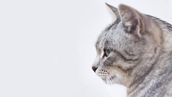 giardien katze behandlung