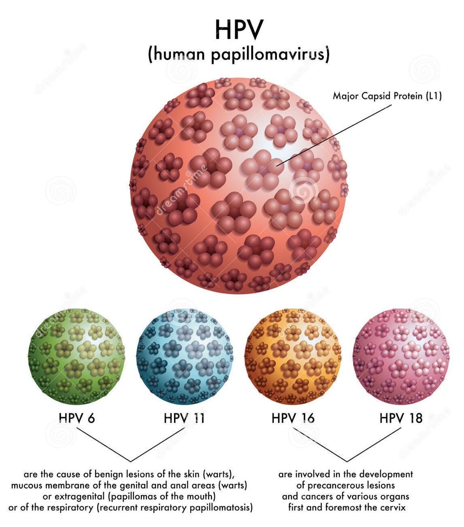 szemölcsök a papillomavíruson vese méregtelenítő ételek