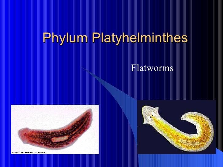 Phylum platyhelminthes ppt, Read Tengeri akvárium berendezése Platyhelminthes flatworms ppt