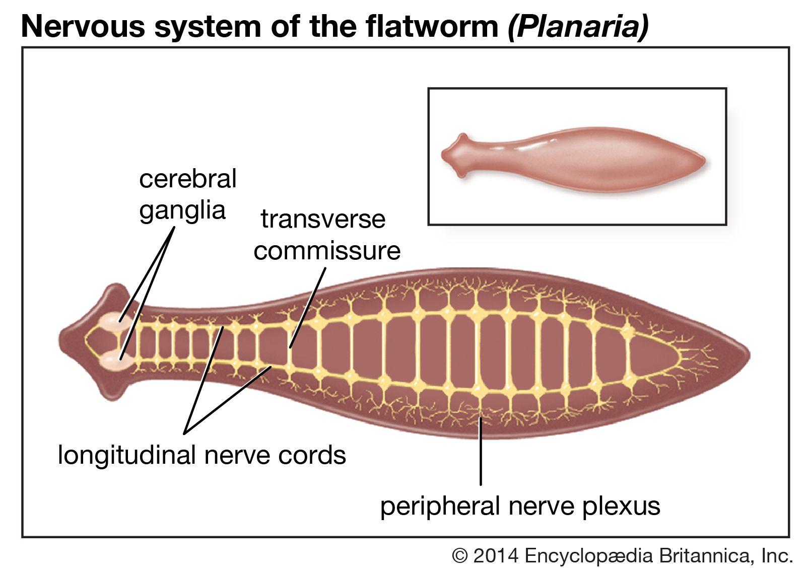 gyógyítsa meg a papilloma vírus emberét genitális szemölcsök minden tünet