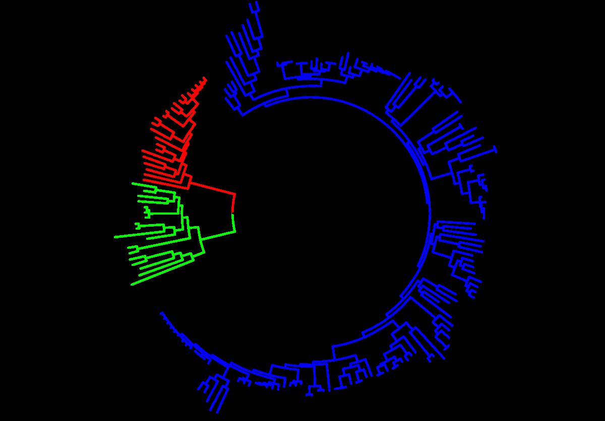 Evolúció (biológia) – Wikipédia