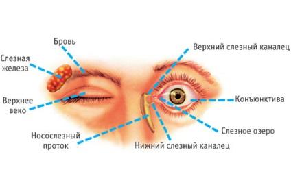 Milyen férgek élnek a szemekben