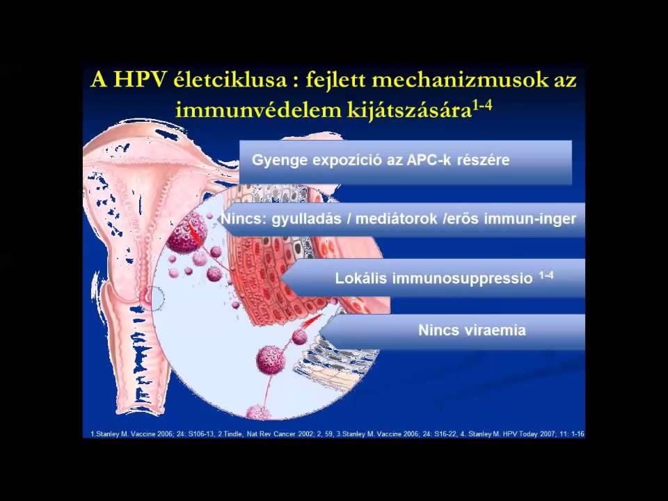 papillomavírus életciklusa hpv vakcina és vastagbélrák
