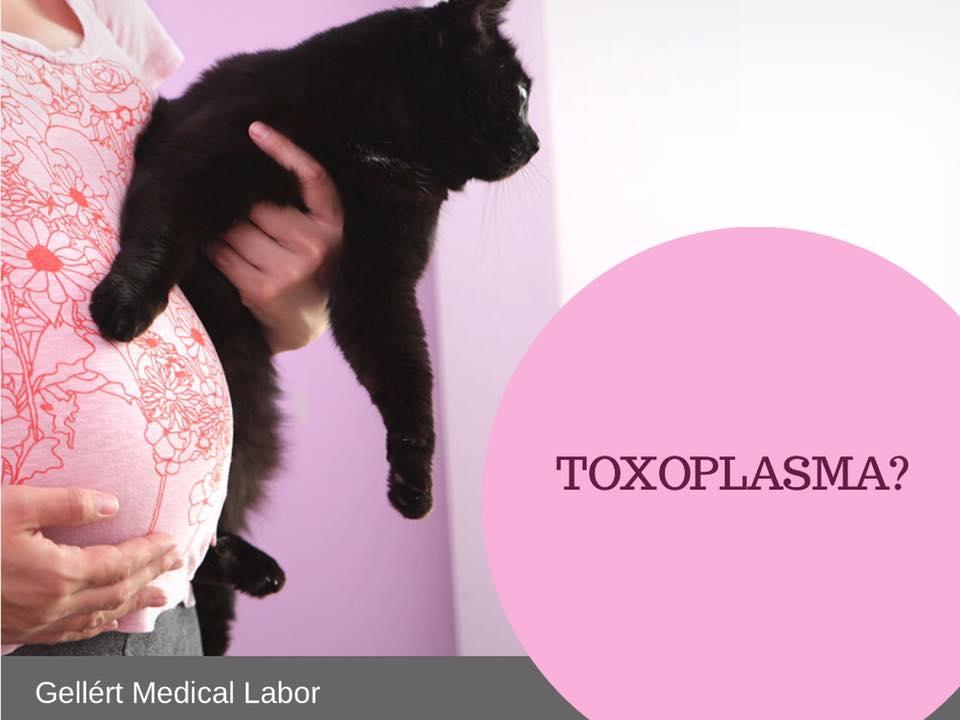 toxoplazmózis terhességi tünetekben