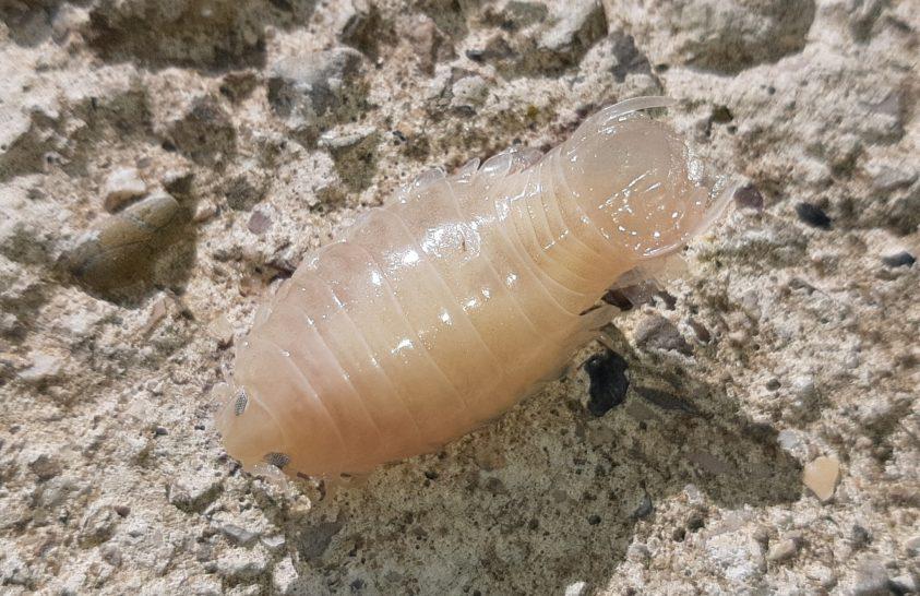 Paraziták és gombák elleni kezelés, Paraziták jelenléte a szervezetben