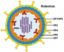 vírusok példa papilloma vírus tumor ember