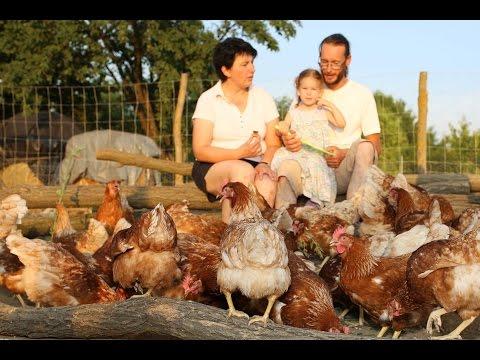 tojótyúkok férgekkel történő kezelése