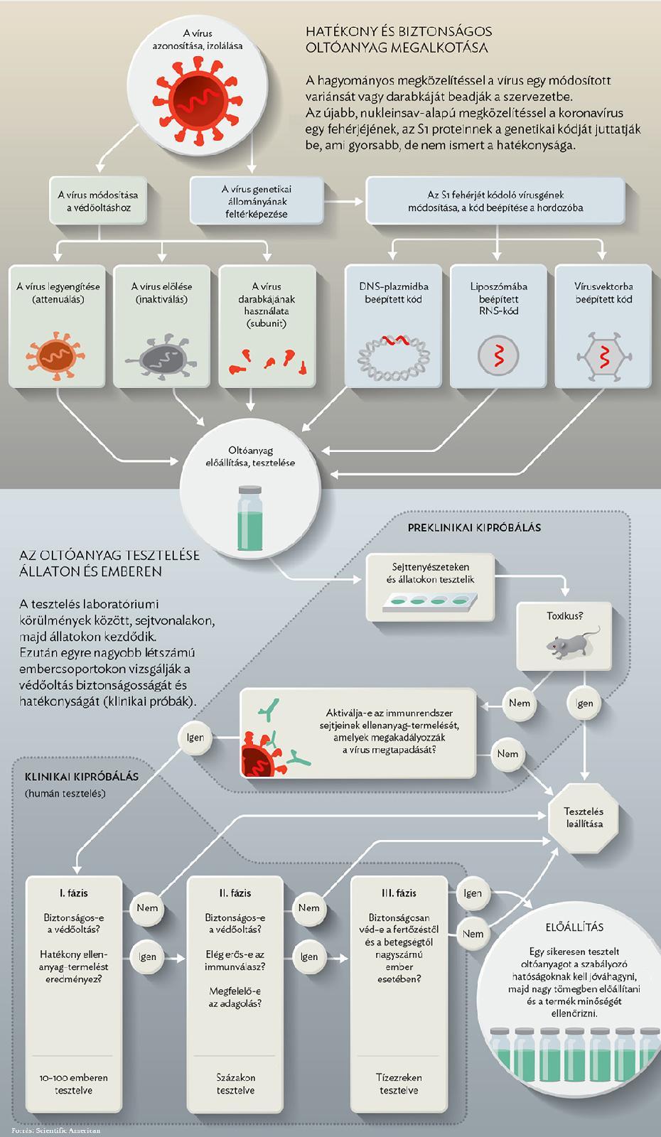 humán papillomavírus vakcina francia nyelven gyomorrák első tünetei