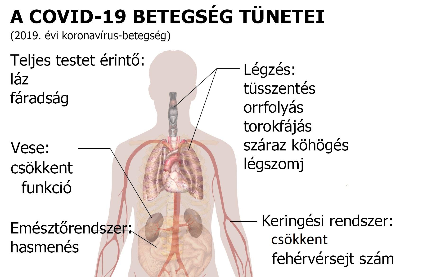 az üregférgek tünetei az emberi testben