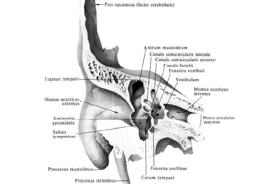 a papilláris elváltozás az intraductalis papillómát kedvez