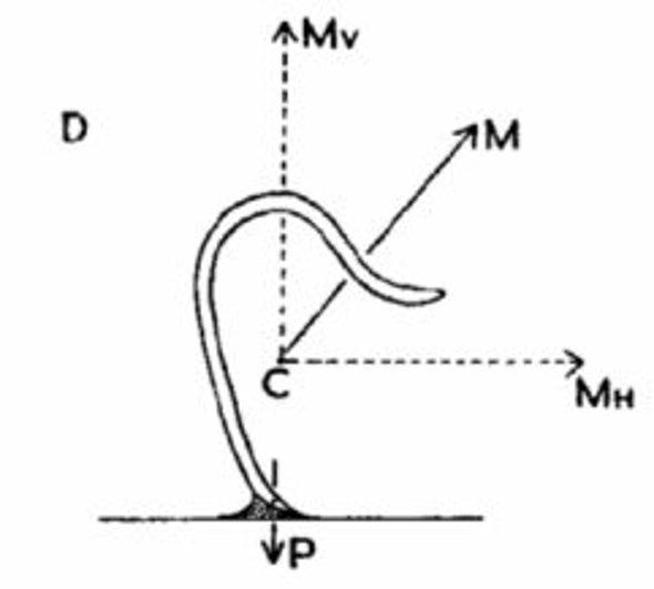 Pinworms életciklus diagram Dysenteric améba parazita