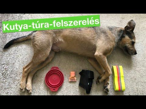 pinworms kutyák tüneteiben