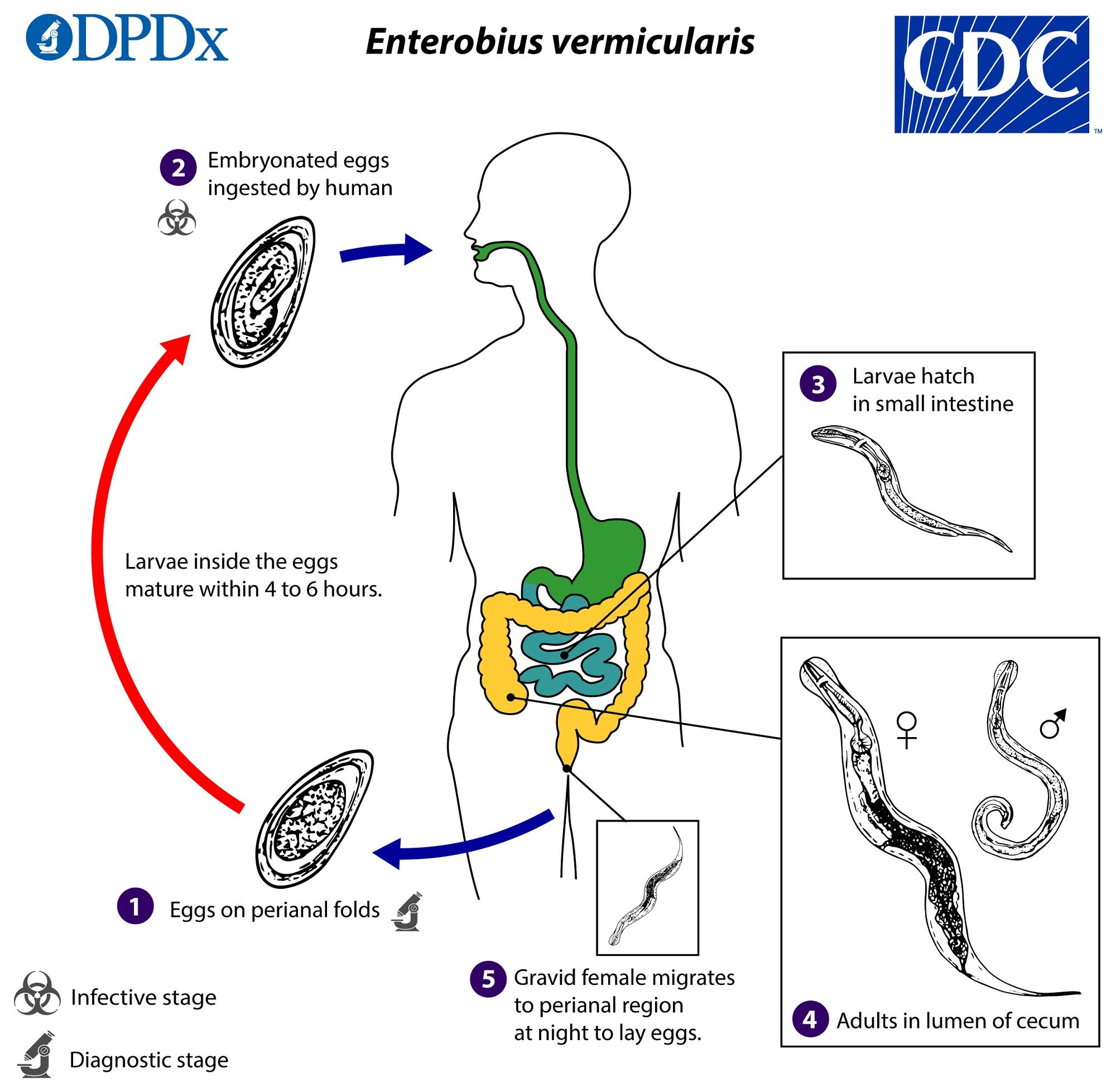 Cdc dpdx paraziták