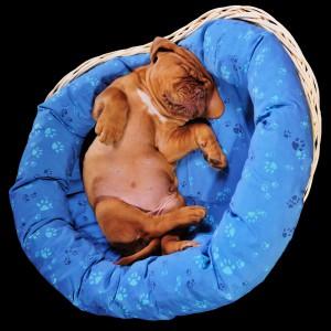 Emberben elo parazitak - Trichuriasis - Giardia hond zwangerschap