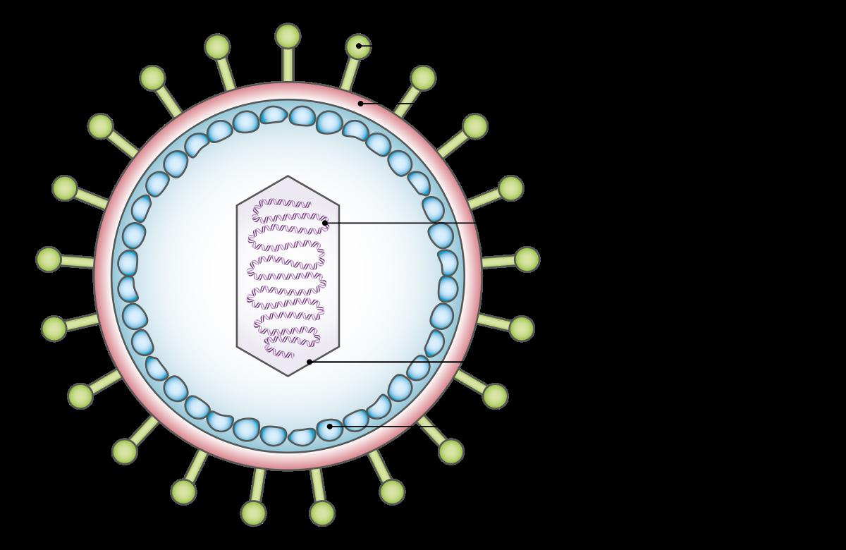 securatik.hu - Ilyen a jóindulatú HPV