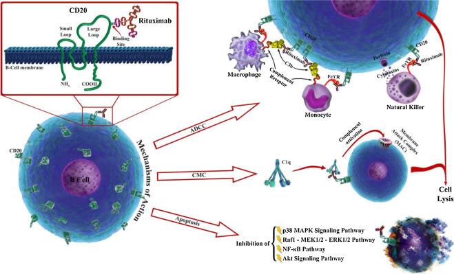 A nőgyógyászati daganatok korai felismerése