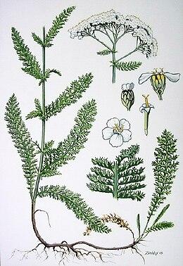 Növénytársitások táblázatszerűen - Noll kertészet