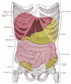 csípő hashártya rák