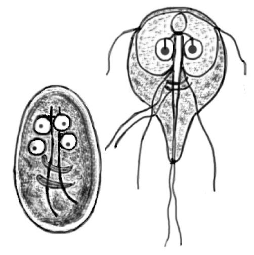Bőr giardiasis, Giardiasis megnyilvánulása a bőrön