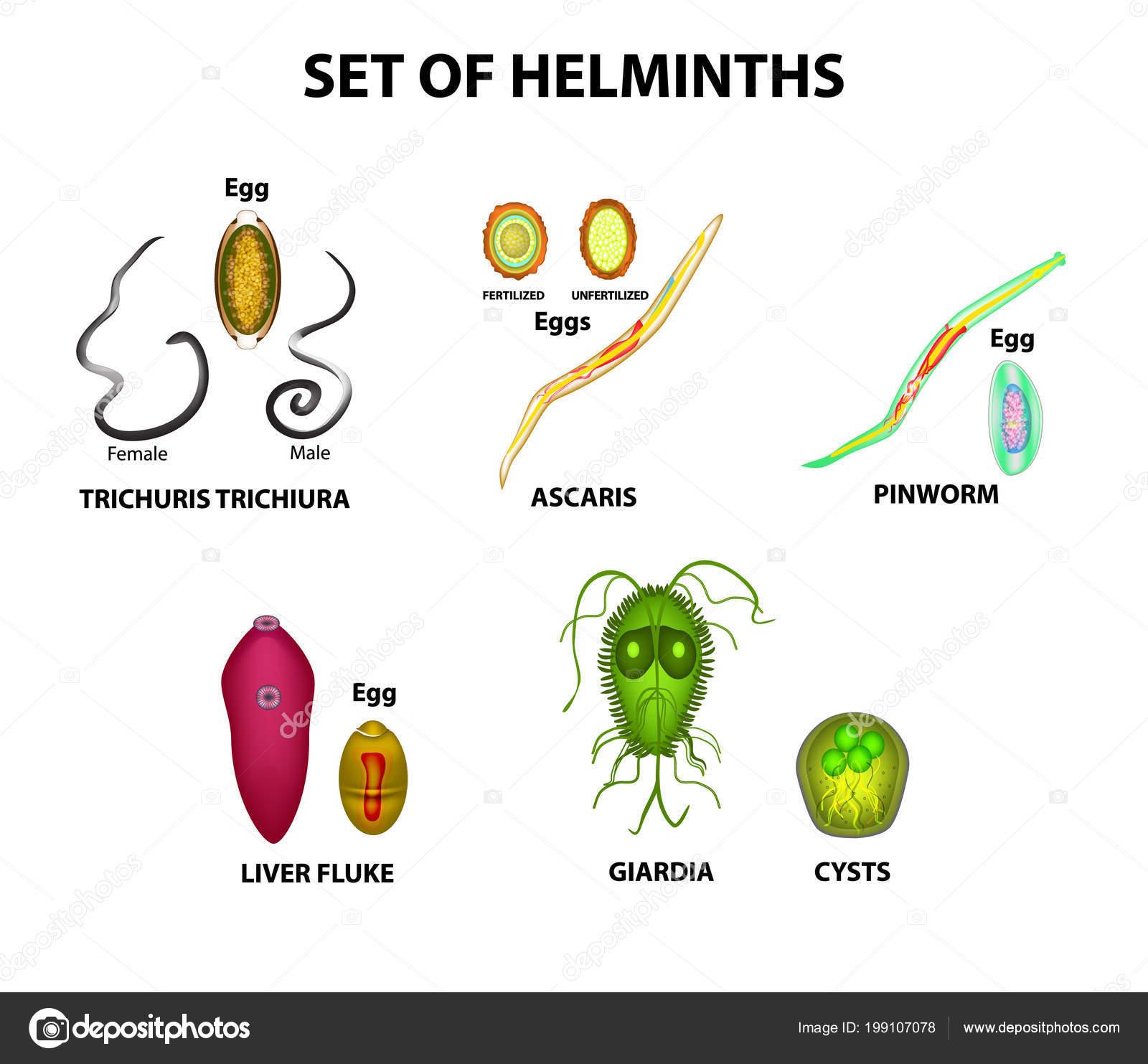 tojás d helminthes diéta helmintiaza