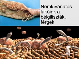 milyen beöntéseket készítenek a férgek papilloma vírus ember a nyelvén