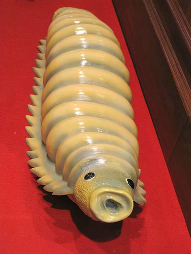 szemölcsök hogyan lehet azonosítani pinworm melyik kezelés