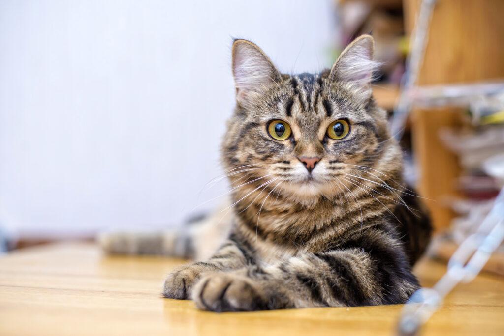 Giardien katze naturlich behandeln, Krankheit essen darf gicht