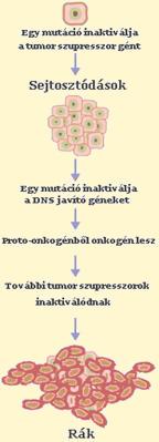 hashártya rák és székrekedés