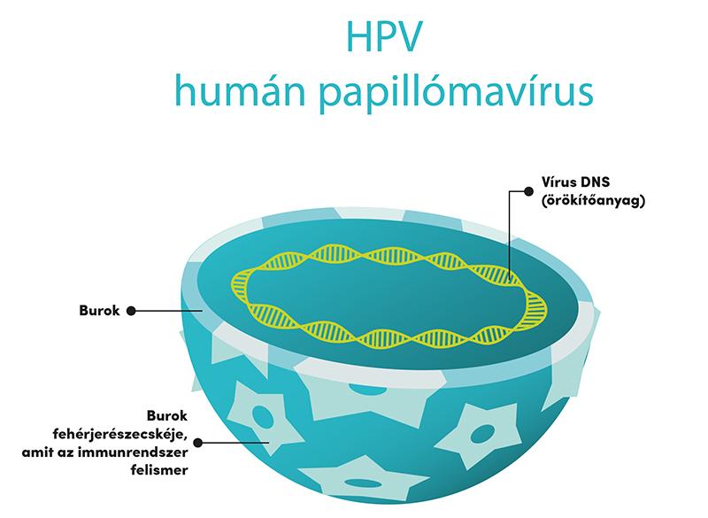 papilloma vírus kockázata