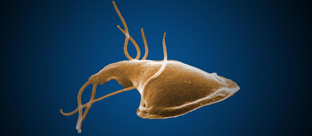 méregtelenítse a hofigalis vastagbelet hasnyálmirigyrák sárga