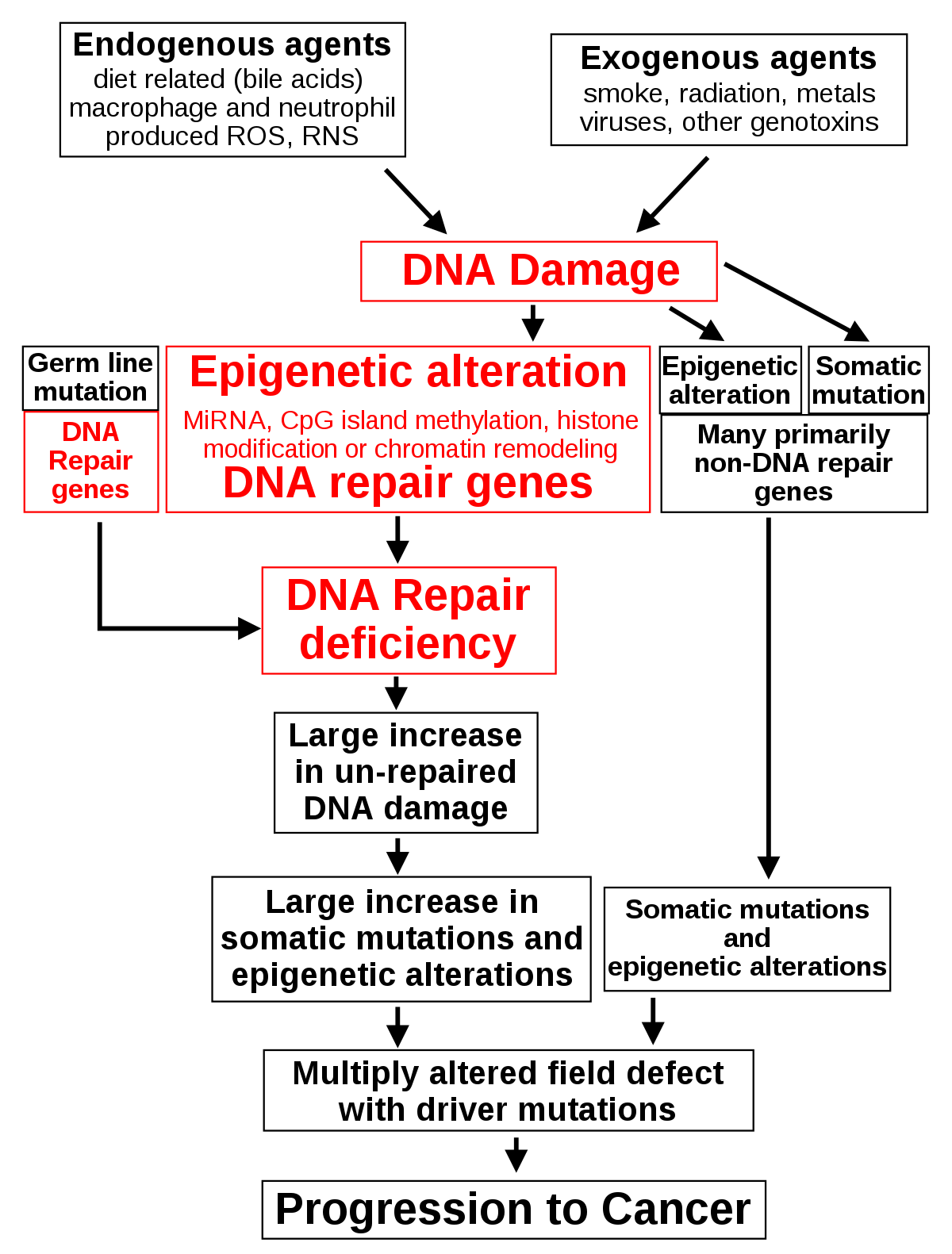 szarkóma rákos per papillomavírus hpv fertőzés