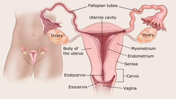Nőgyógyászati daganatok - Szánthó András válaszolt   securatik.hu