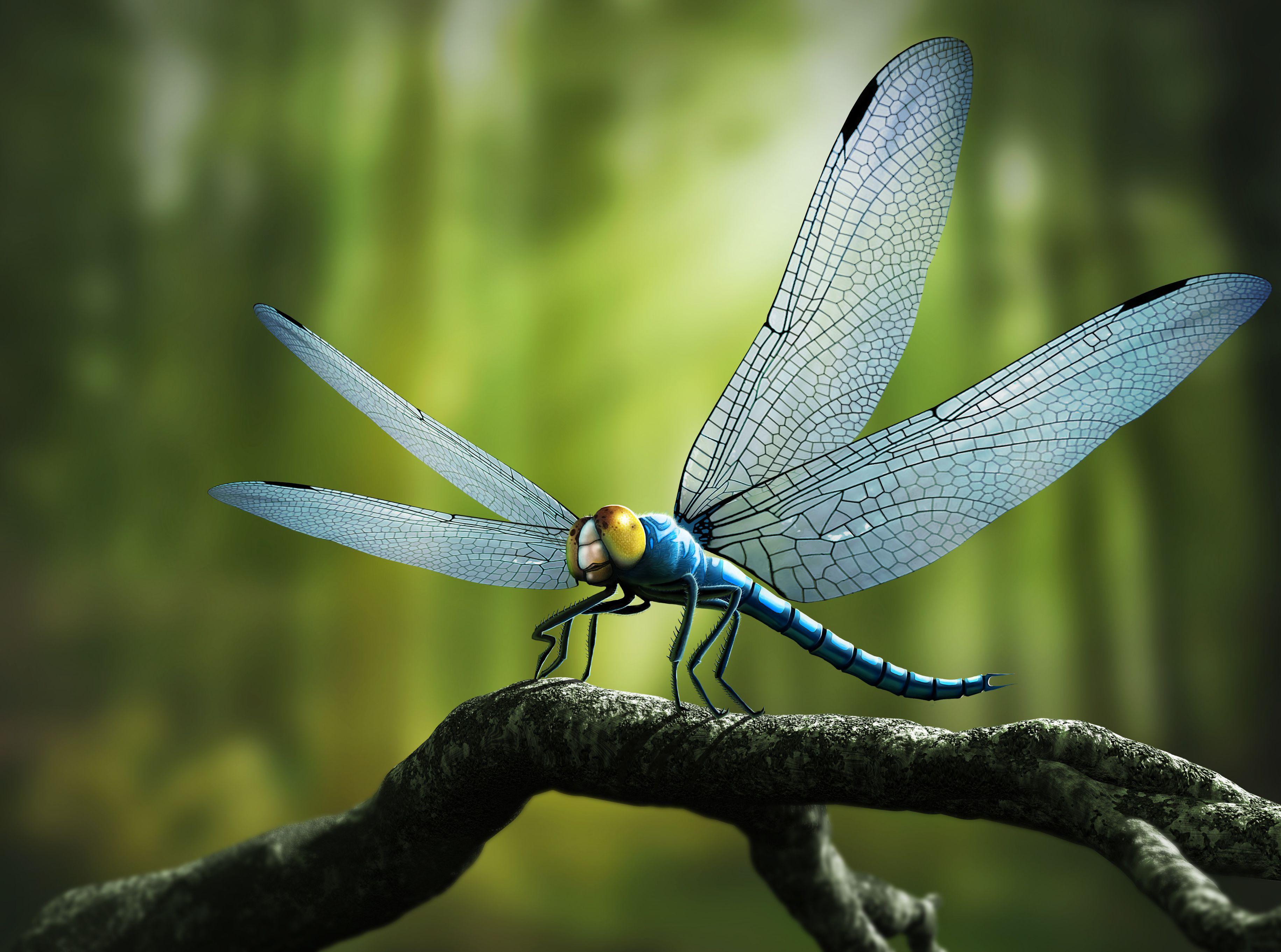 Entomológiai hadviselés – Wikipédia
