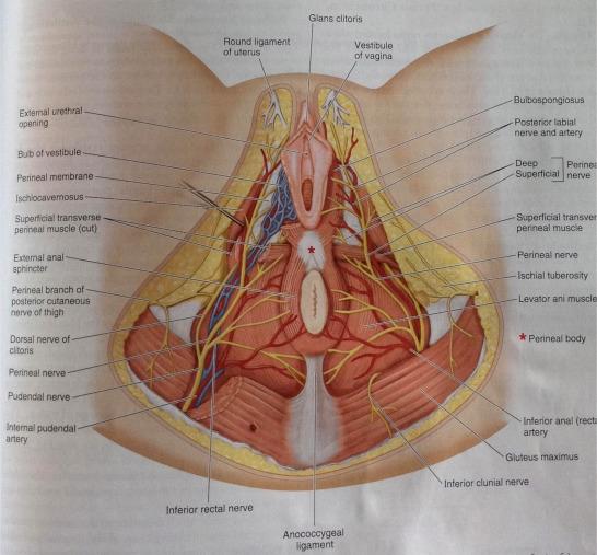 pikkelyes papilloma perineum