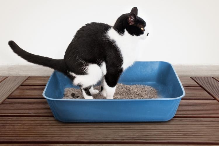 a macska nem eszik férgeket
