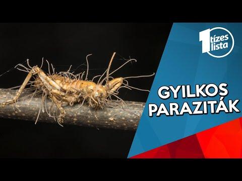 csoportos parazita)