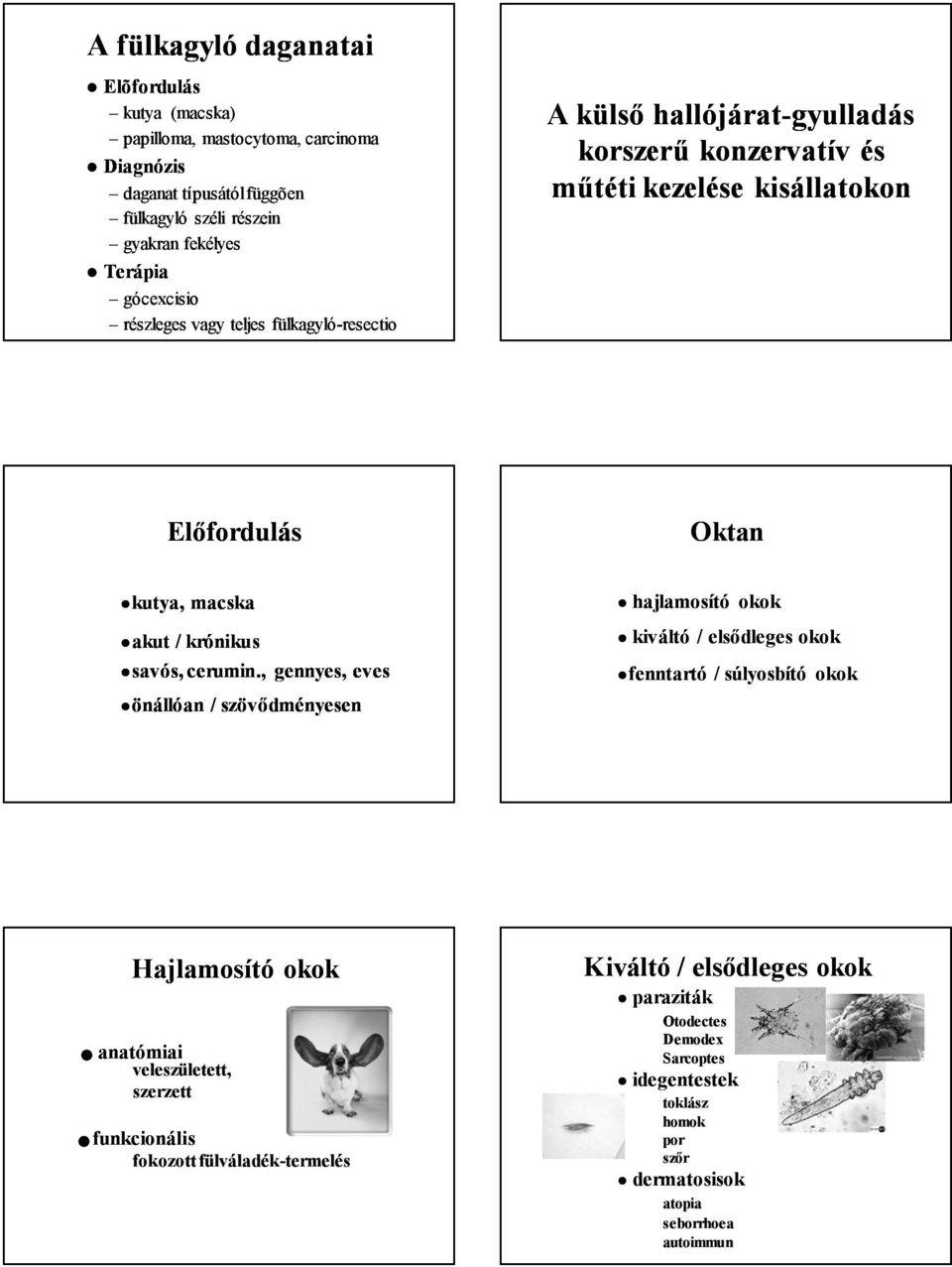 papilloma paraziták jele gyermekek giardiasisának gyógyszerei