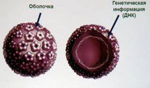 humán papillomavírus négyértékű rekombináns vakcina a bőrgyógyász eltávolítja a papillómákat