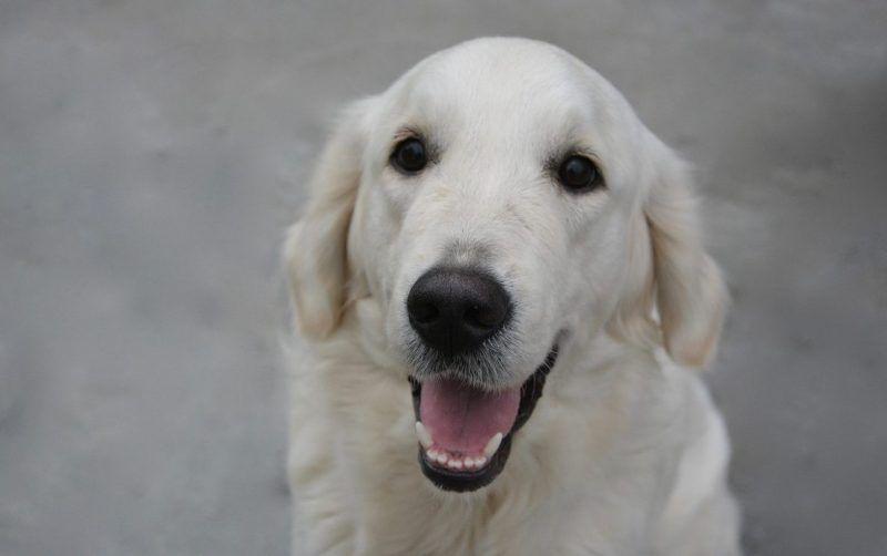 Lymphoma kutyákban | securatik.hu